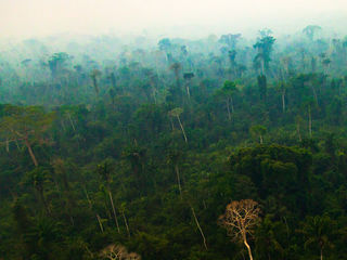 Human Activities Are Drying Out the Amazon: NASA Study